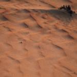sand waves desert abudhabi